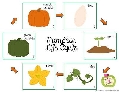 3-6 Free Resources Pumpkin Life Cycle Freebie