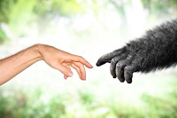 Pengertian Evolusi, Tokoh, Sejarah, Prinsip, Bukti, Ciri, dan Mekanismenya