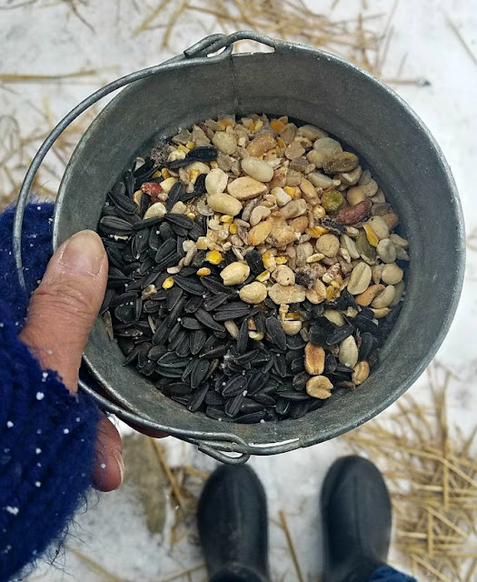 pail of seeds and nuts