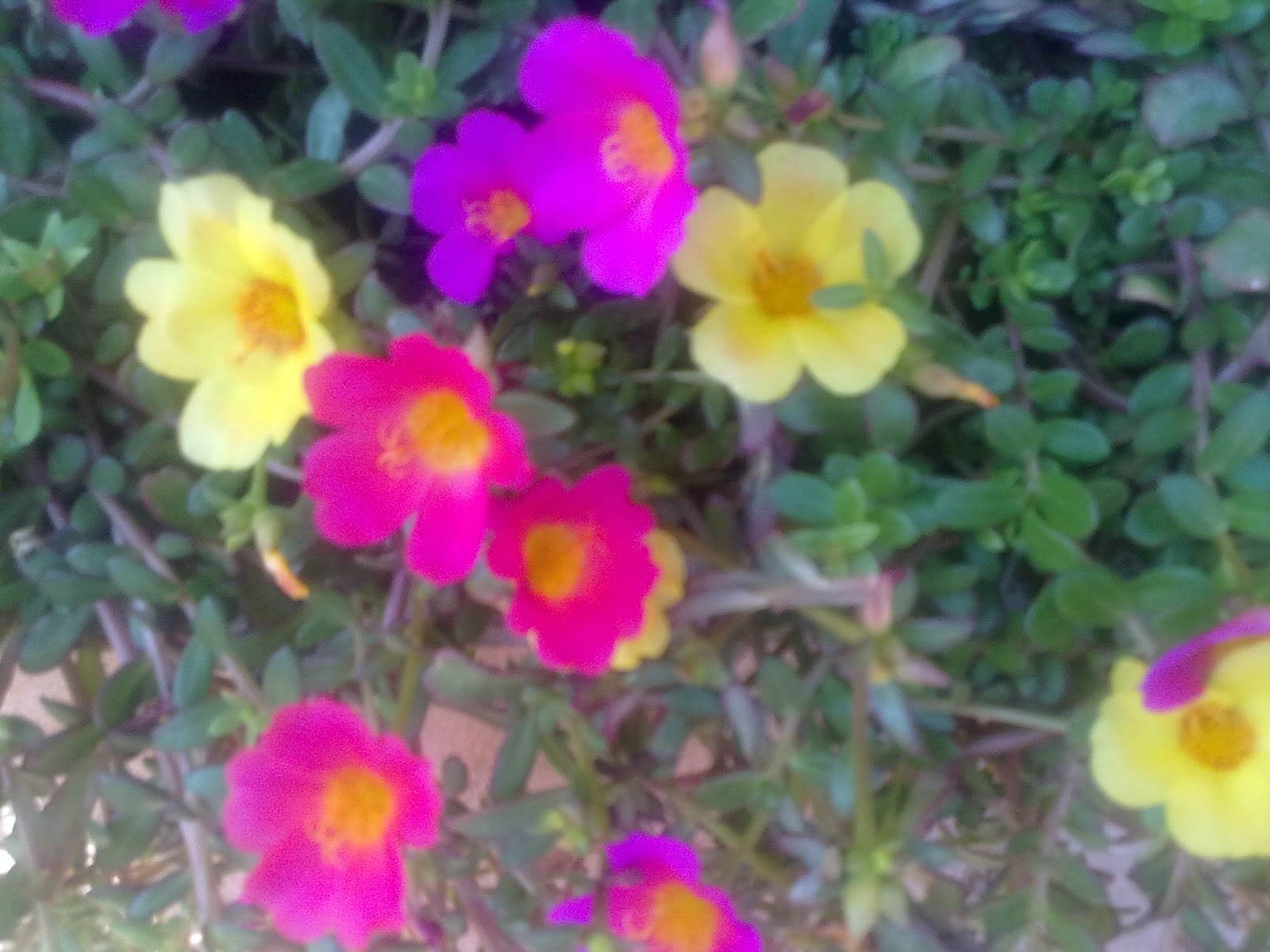 Flores para primavera y verano - Plantas de temporada primavera ...
