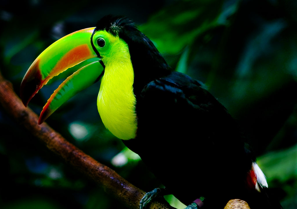 Cute Wallpapers Of Kittens And Puppies Funny Pictures Gallery Tucan Birds Toucan Bird Tucan