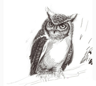 How to Draw a Owl