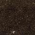 VIET NAM BLACK PEPPER PINHEAD 1MM; 1.5MM; 2MM