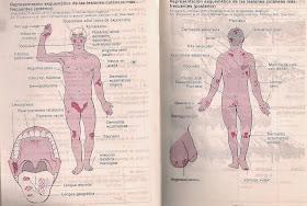 rezorcinol condilom