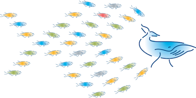 A school of small fish has the same biomass as a blue whale. A whale takes about 5 minutes to turn 180º. On the other hand, a school of small fish switches direction in an instant.