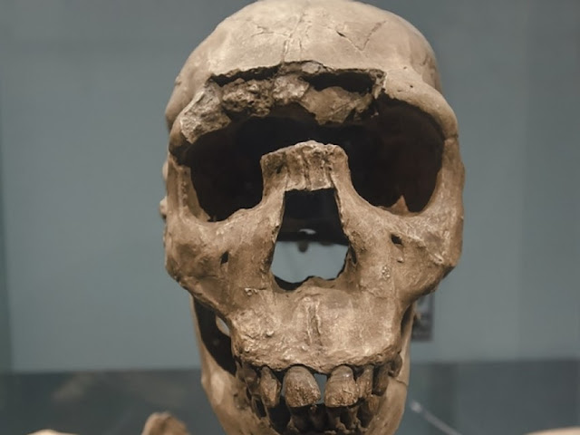 Seeking ancestral commonalities with modern human body type, researchers find stockier answer