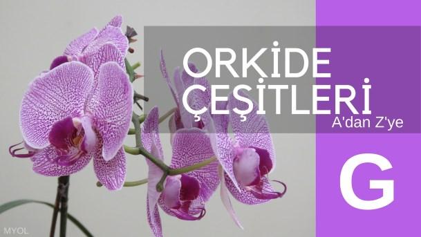 Orkide Çeşitleri G Harfi İle Başlayan Orkideler