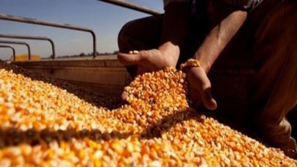 Vuelven a subir en el Mercado de Chicago los precios de la soja, el maíz y el trigo