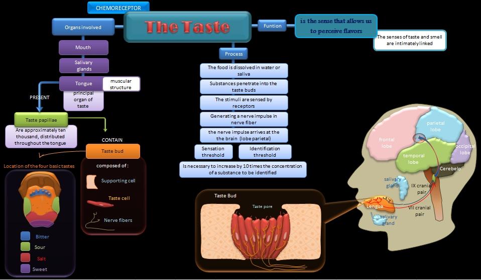 Educative diagrams: Diagram of the Sense of Taste