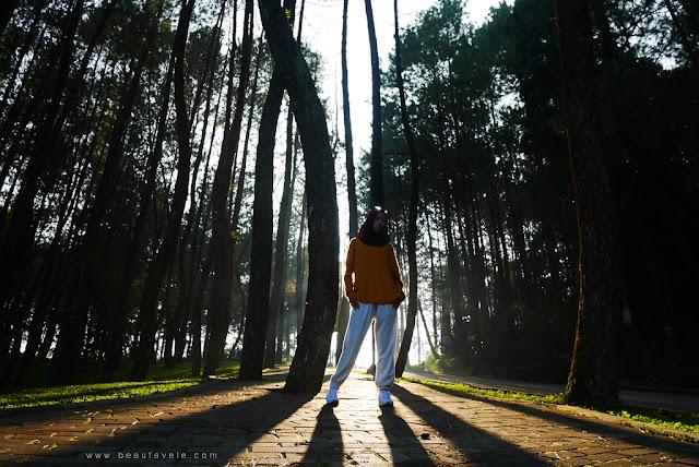 Hutan Pinus di Pesona Alam Resort & Spa