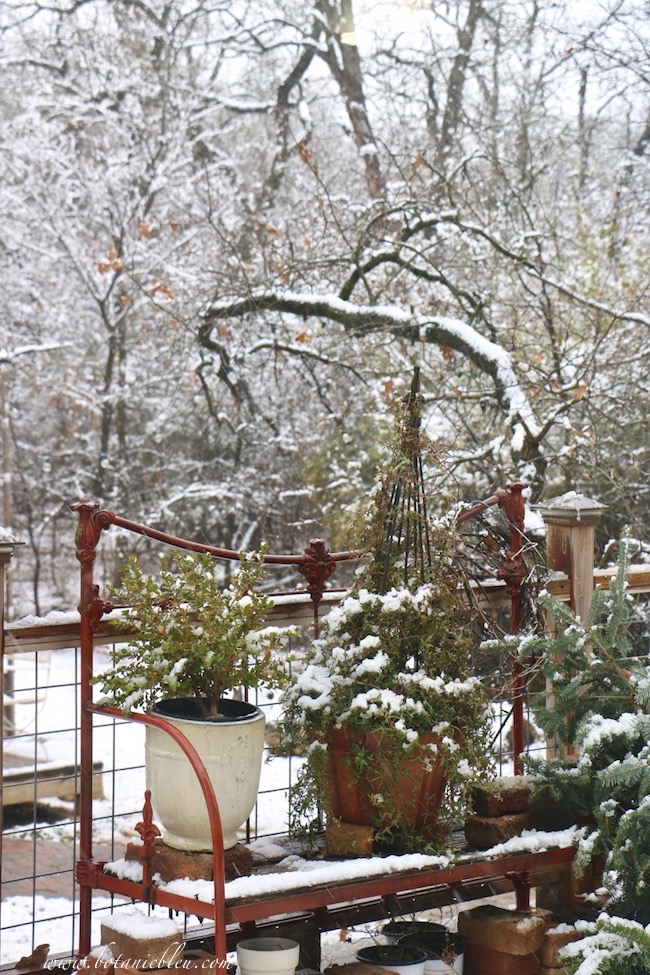 Winter botanicals provide color all Winter especially during snowstorms