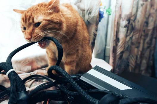 Co zrobić, gdy kot gryzie kable?