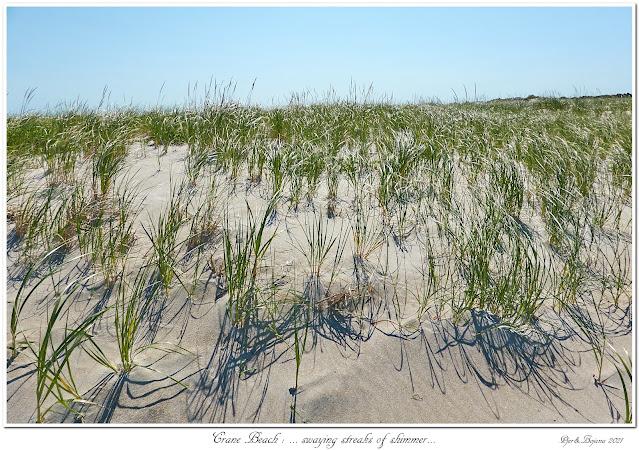 Crane Beach: ... swaying streaks of shimmer...