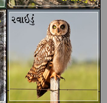 Hello to some beautiful birds from Gujarat and the world