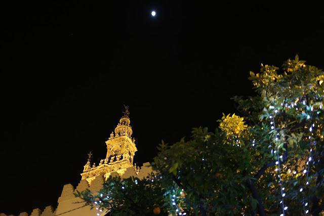 Fotografía nocturna de la giralda sobre la copa de un naranjo amargo