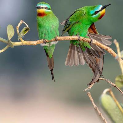 صور طيور حلوة اوى