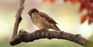 Tips Untuk Penjual Burung via Online atau Soial Media