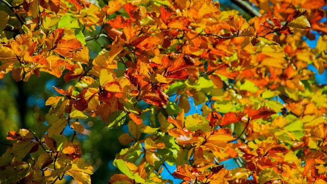 Gekleurde bladeren aan een boom.