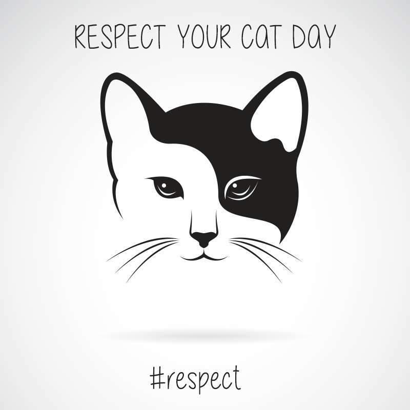 Respect Your Cat Day Wishes Pics
