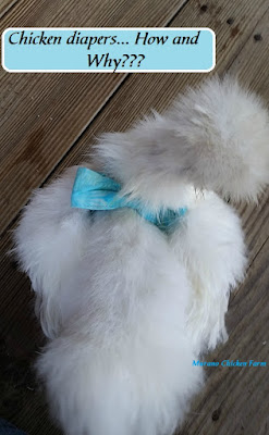 chicken diapers on a white silkie