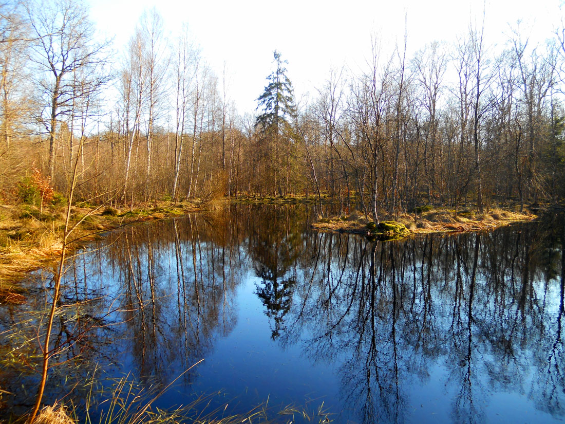 11 marzo in bosco