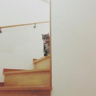 階段 ぞうきん掛け