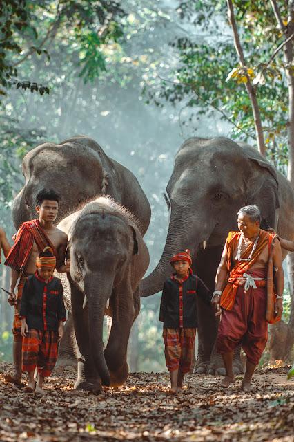 Мужчина и дети идут в джунгли со слоном