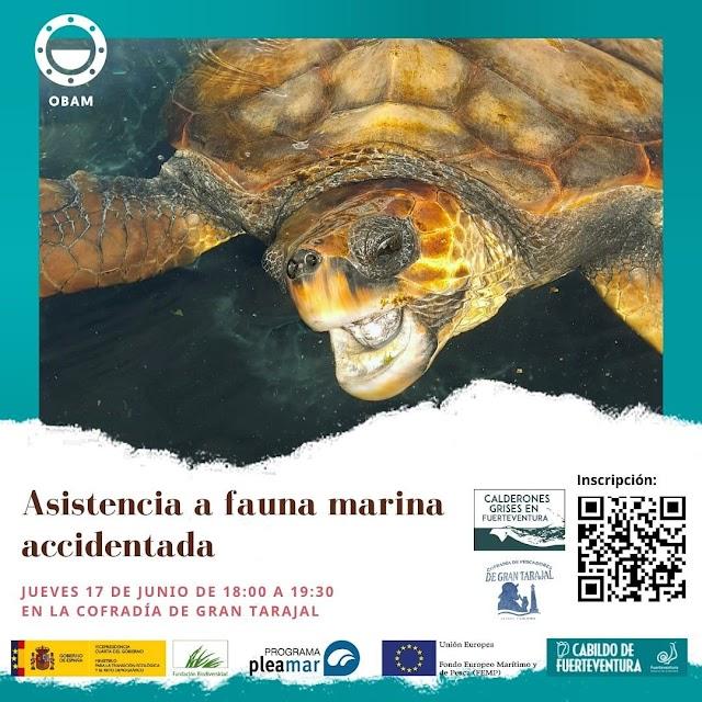 Cabildo Fuerteventura y Observatorio de Basura Marina imparten un taller sobre asistencia a fauna accidentada para trabajadores del mar