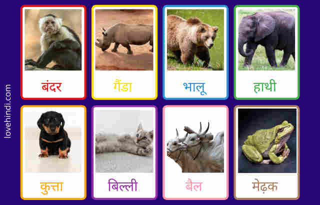 Animals name in Hindi