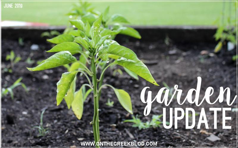 Garden update | June 2019