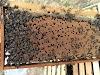 Μόσχος Ντιώνιας: 8 Μυστικά στη συνέννωση των μελισσιών