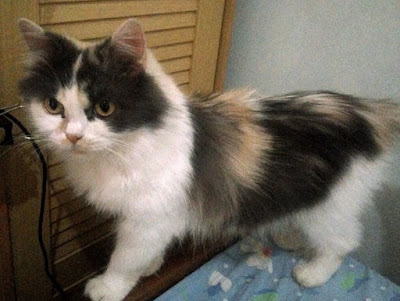 Cara Menghilangkan Kutu Kucing Dengan Sunlight