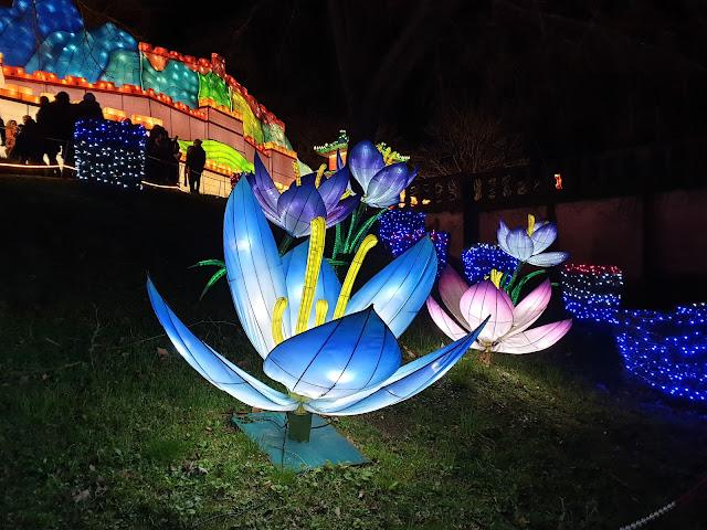 Festival Lanternes Gaillac Blog Hélidée Fleur Lotus bleu
