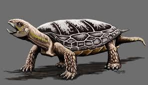 Descubren una nueva especie de tortuga en San Juan, oeste de Argentina