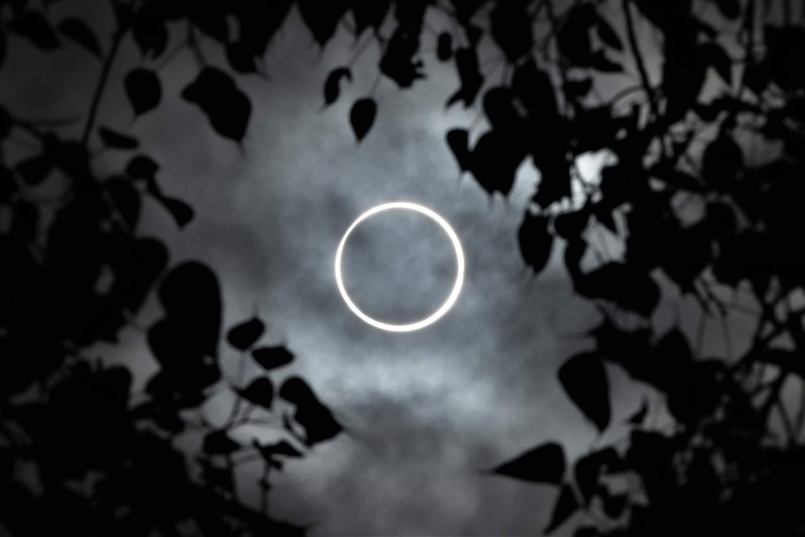 "Thousands of people were able to observe on Thursday  an annular eclipse of the Sun,  also known as a ""ring of fire"" because of the light circle it generates."