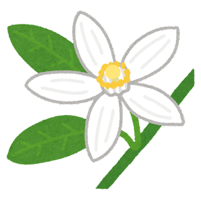みかんの花のイラスト