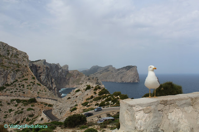 Illes Balear, Països Catalans, Patrimoni de la Humanitat