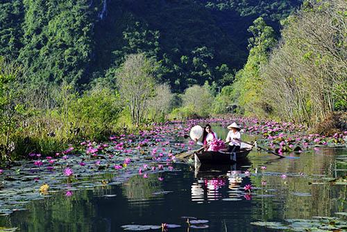 Yen stream - Huong pagoda in purple waterlily season