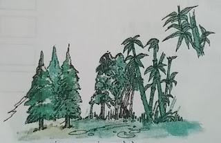 सदाबहार वन