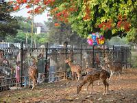 Taman Rusa Cervus timorensis  Kemang Pratama, Tempat Wisata Warga Di Bekasi