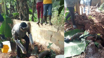 Wife Connives With Her Sons To Kill Her Husband, Bury Him Under A Tree (Disturbing Photos)