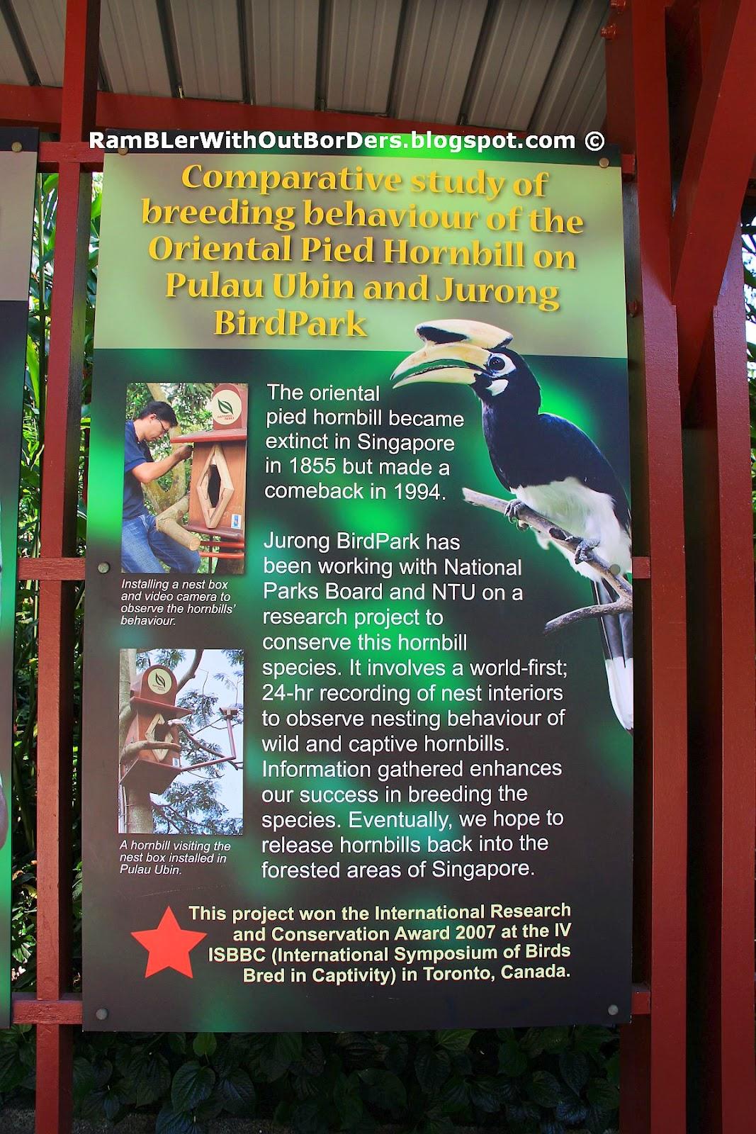 Oriental Pied Hornbill, Jurong Bird Park, Singapore