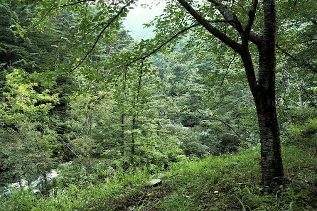Bagaimana Ekosistem Hutan Didefinisikan