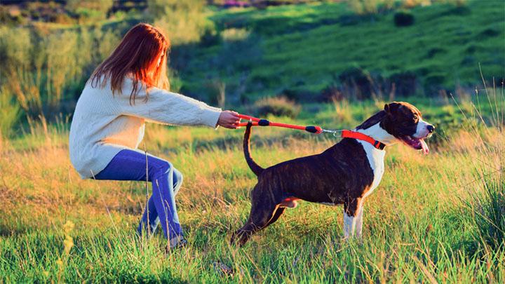 disobedient dog breeds