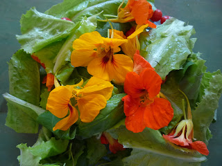 nasturtium leaf and flower salad
