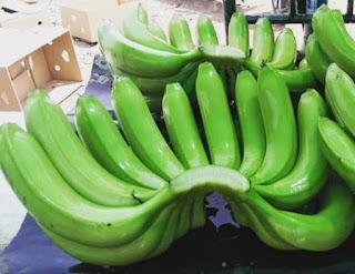 Pisang Cavendish adalah jenis pisang unggul yang tampilan buahnya paling menarik dipandang. Dikatakan menarik karena pisang ini memiliki warna kulit yang cerah dan mengkilap. Terlebih ketika buah pisang Cavendish telah masak, warnanya akan menguning seperti baru selesai dicat. Bentuknya yang sedikit melengkung semkain menambah sisi eksotis sebagai tanaman tropis.