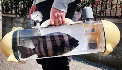 Ingin Mengajak Ikan Kesayangan Jalan-Jalan? Pakai Alat Ini