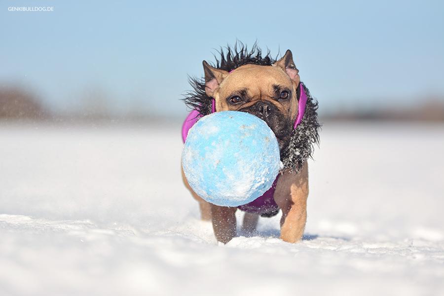 Hundeblog Genki Bulldog, Abenteuer einer französischen Bulldogge