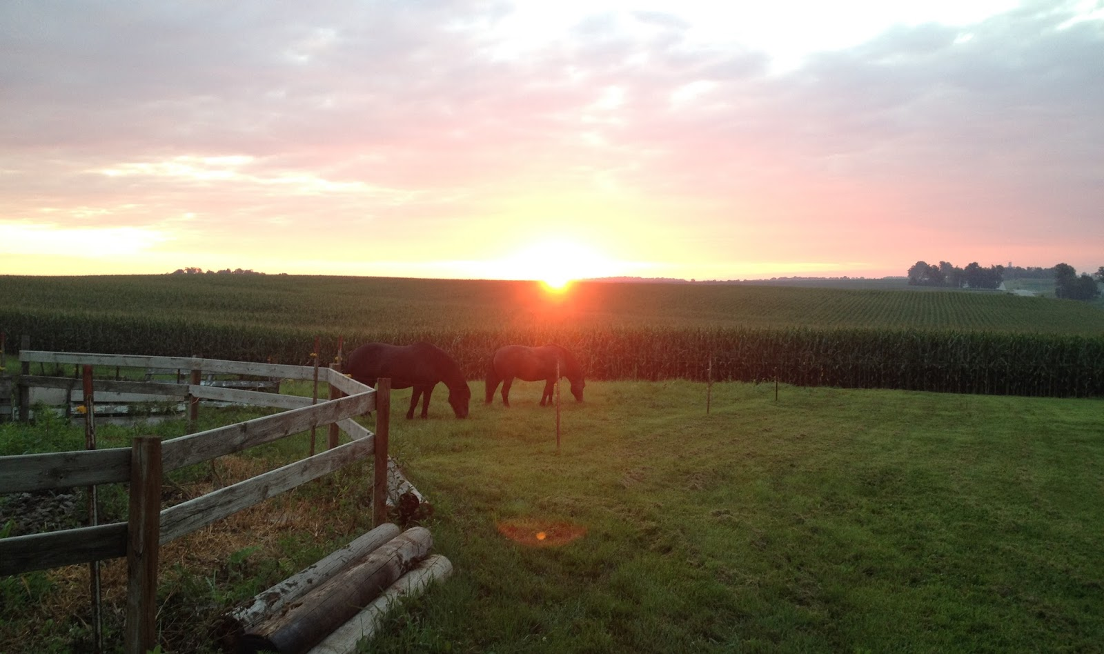Amish Horses: Morning in Amish Country