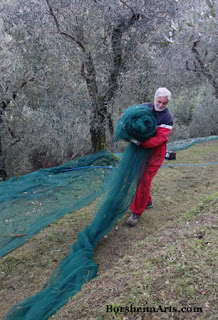 raccolta delle olive Harvest of the Olives Tuscany Moving out Nets